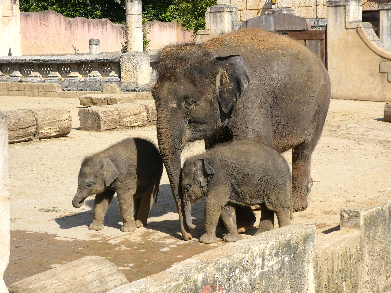 Elefanten  (21)
