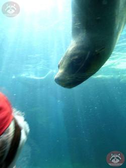 Seebär mit Wuschel (2)
