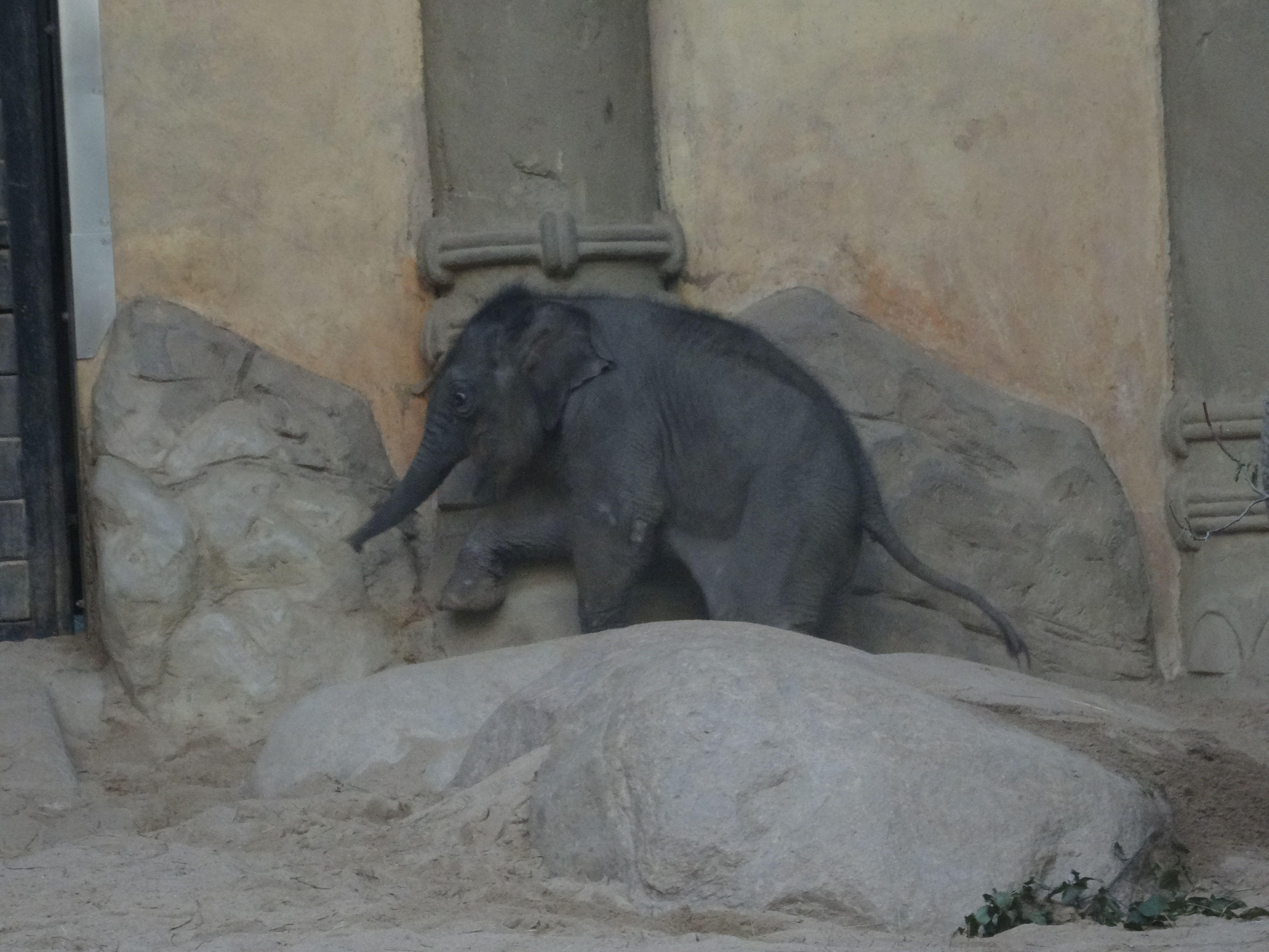 Eelefant  (12)