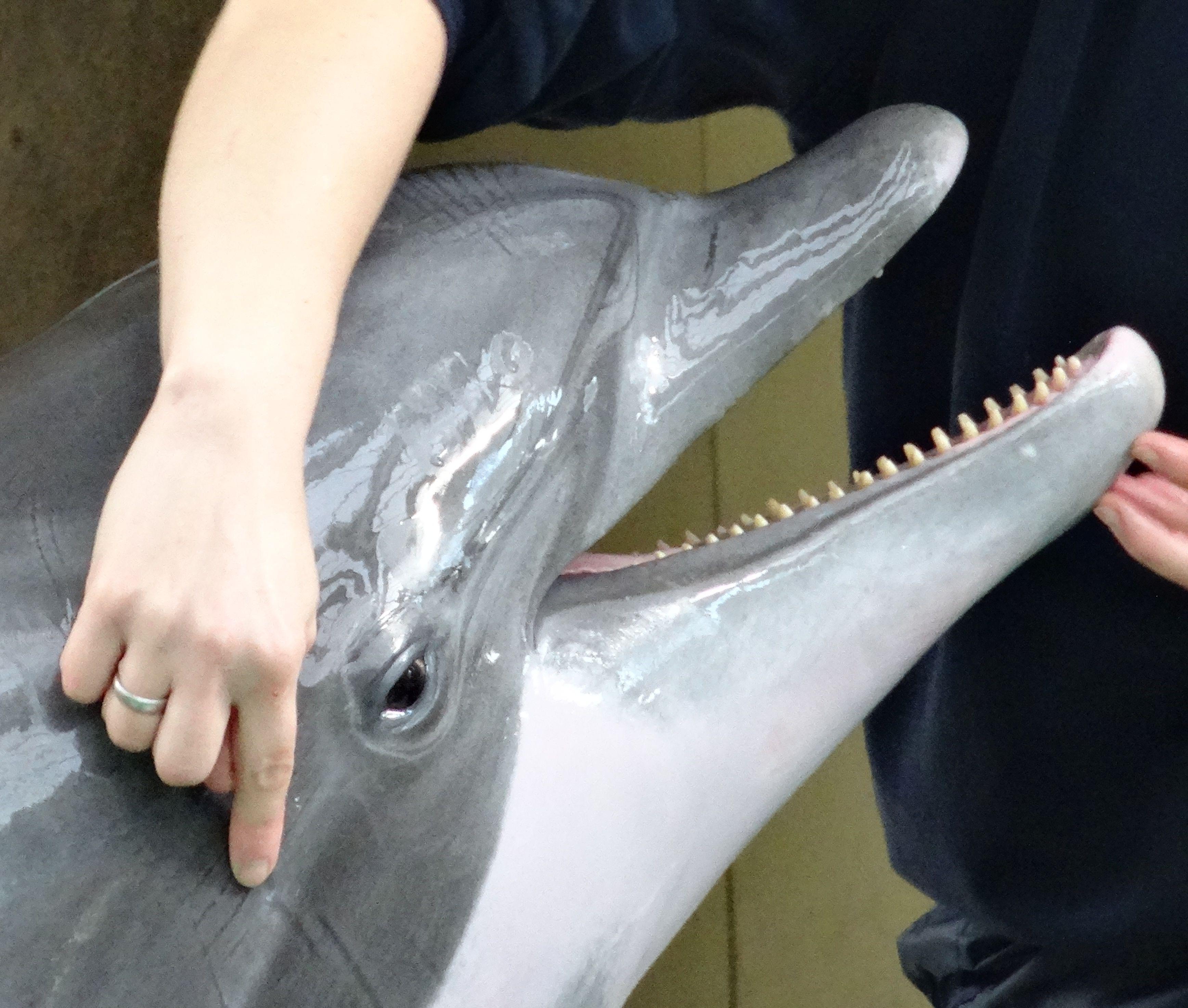Delfin 8