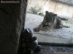 Wuschel und die Tiger jungen