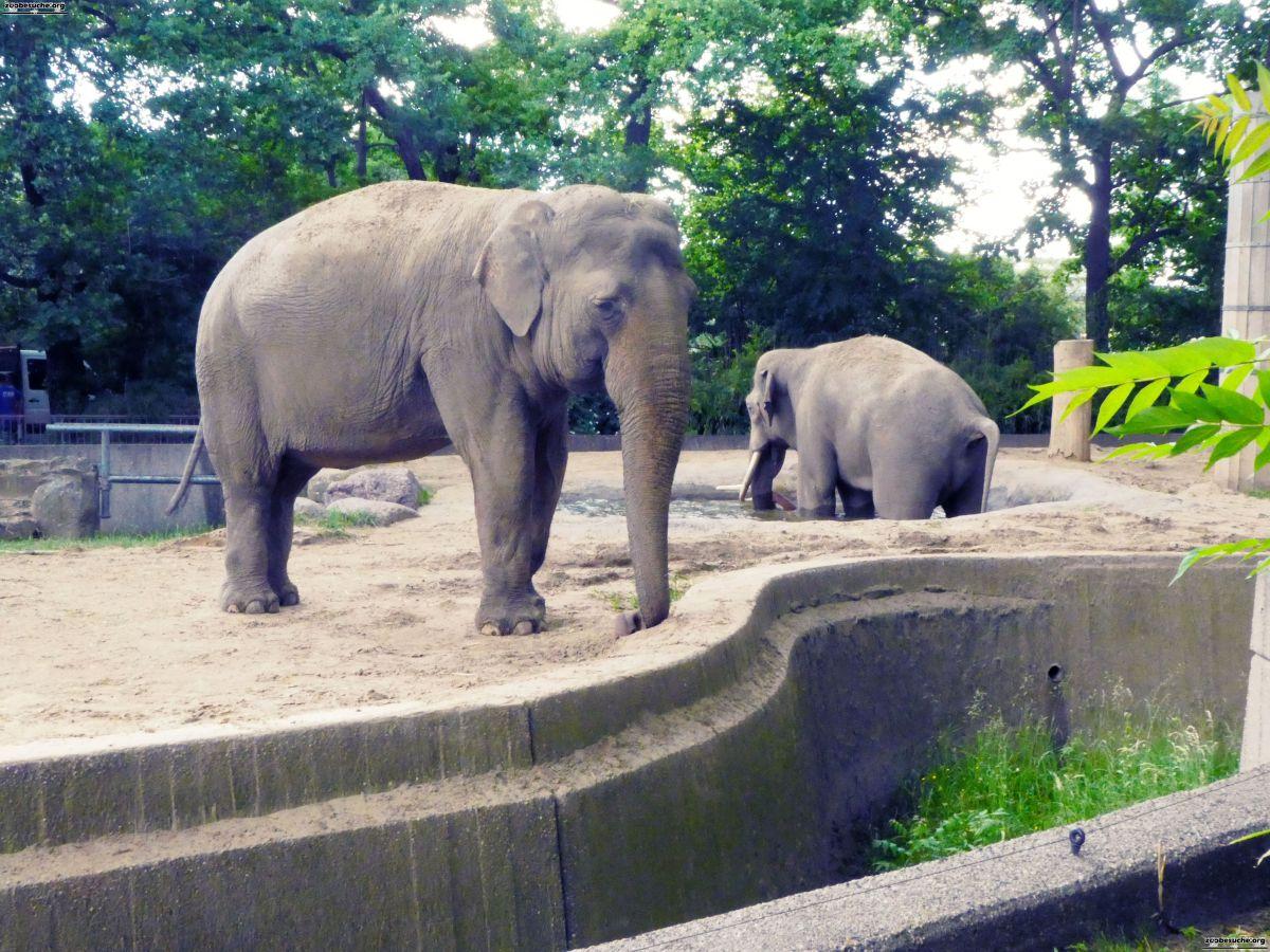 Elefanten  (22)