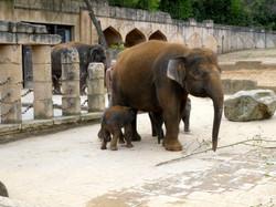 Elefanten  (19)