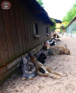 Kaninchen (1)