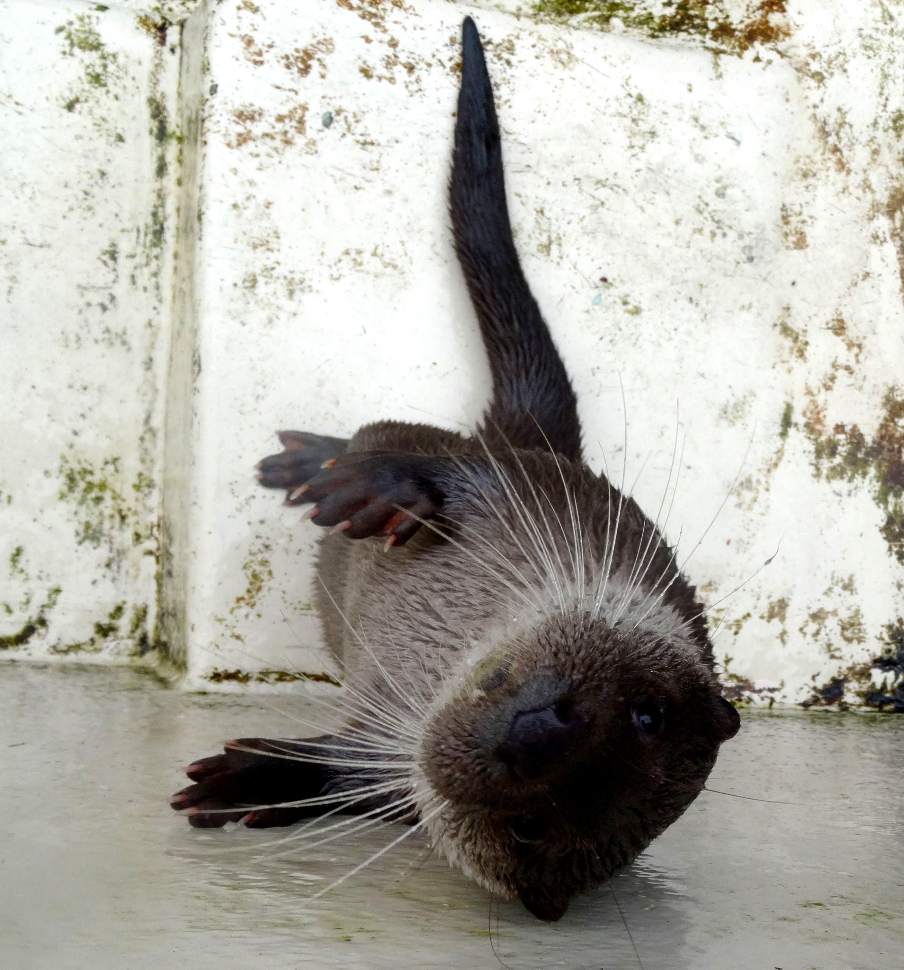 Otter  (5)