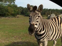 Serengeti Park 294