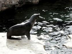 Seebär  (29)