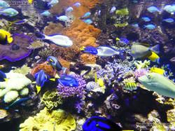 Korallenriff  (1)