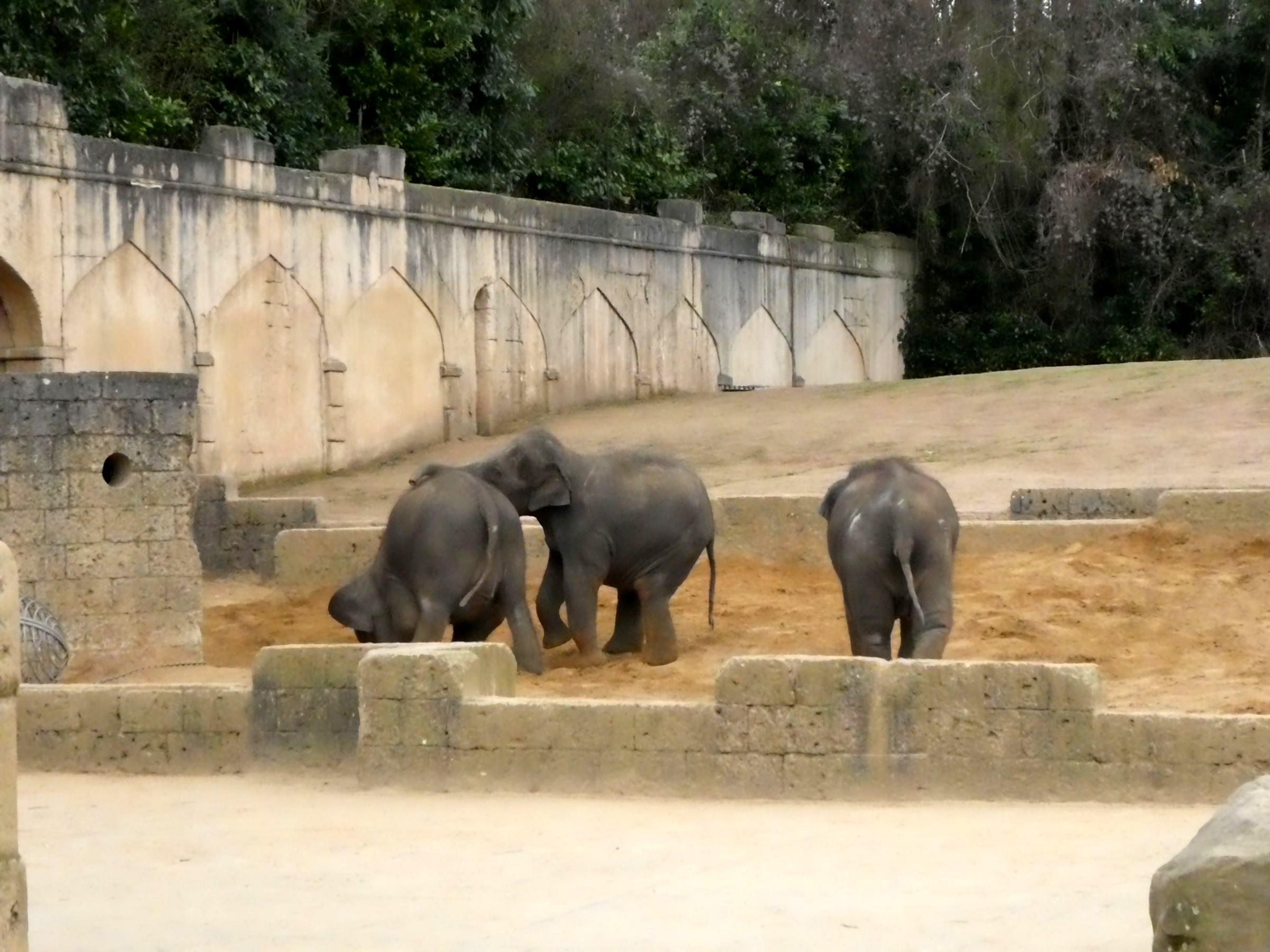 Elefanten (2)