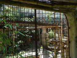 Leopardenanlage