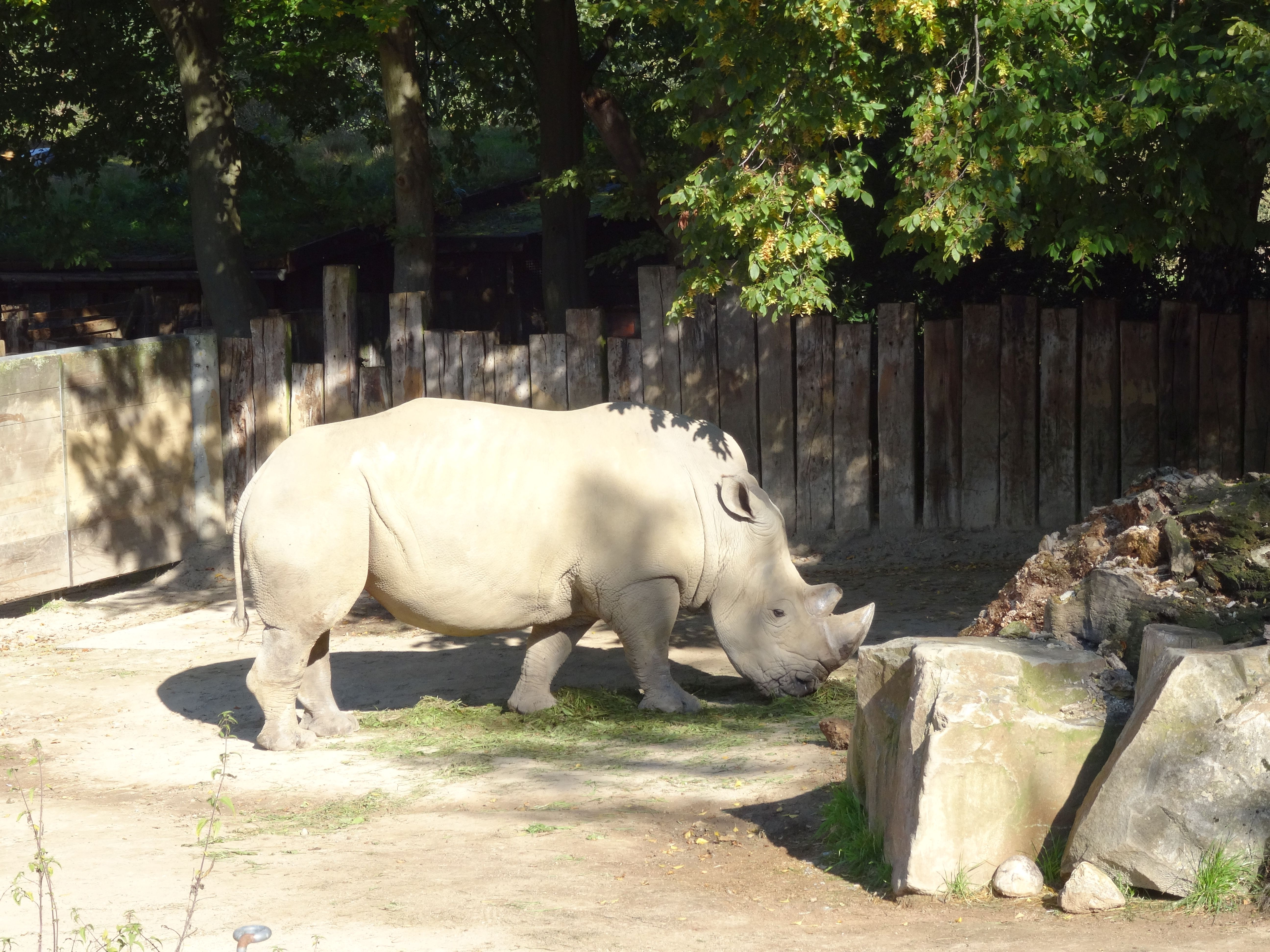 Nashorn 1