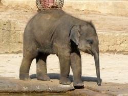Elefanten  (28)