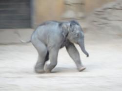 Eelefant  (7)