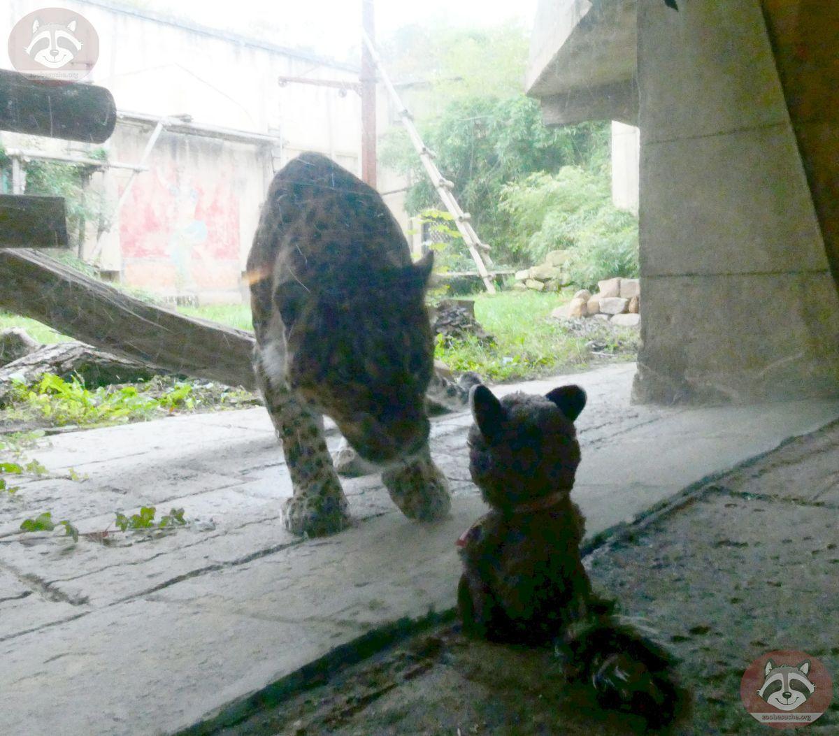 Leopard Julius mit Wuschel (3)
