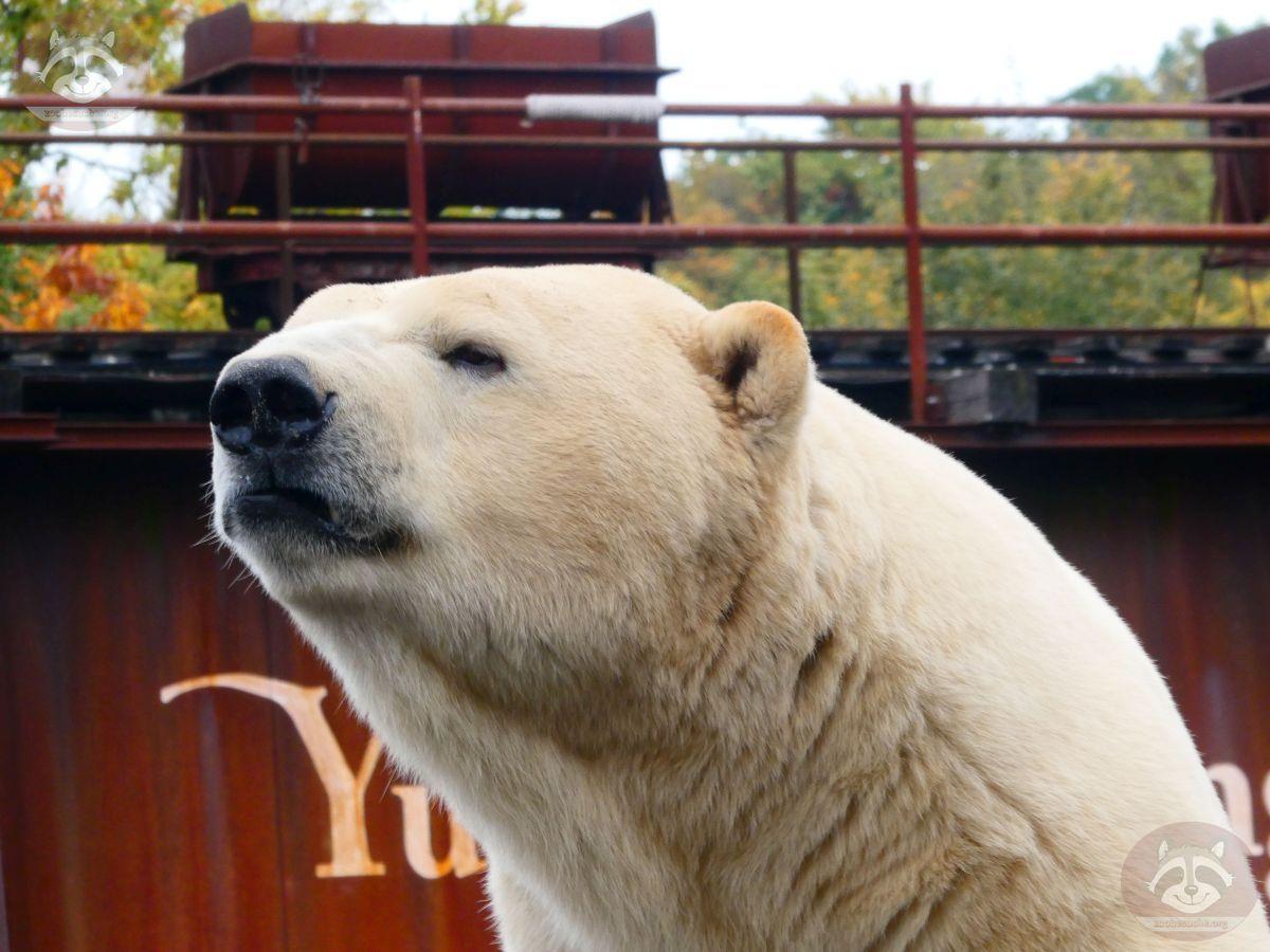 Eisbär Sprinter (5)