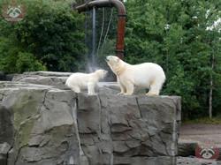 Eisbären_Milana_udn_Nana_(8)