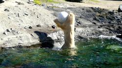 Eisbär  (41)