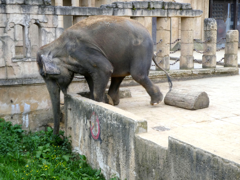 Elefantin Indra (1)