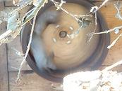 Sibirisches_Eichhörnchen__(1).jpg