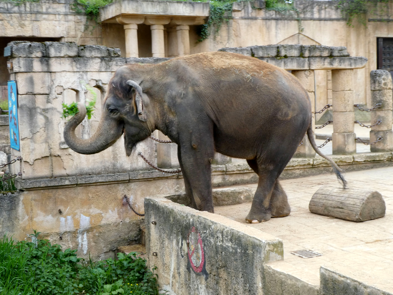 Elefantin Indra (2)