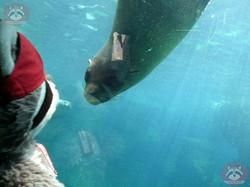 Seebär mit Wuschel (4)