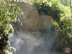 Wuschel im Nebel  (1)