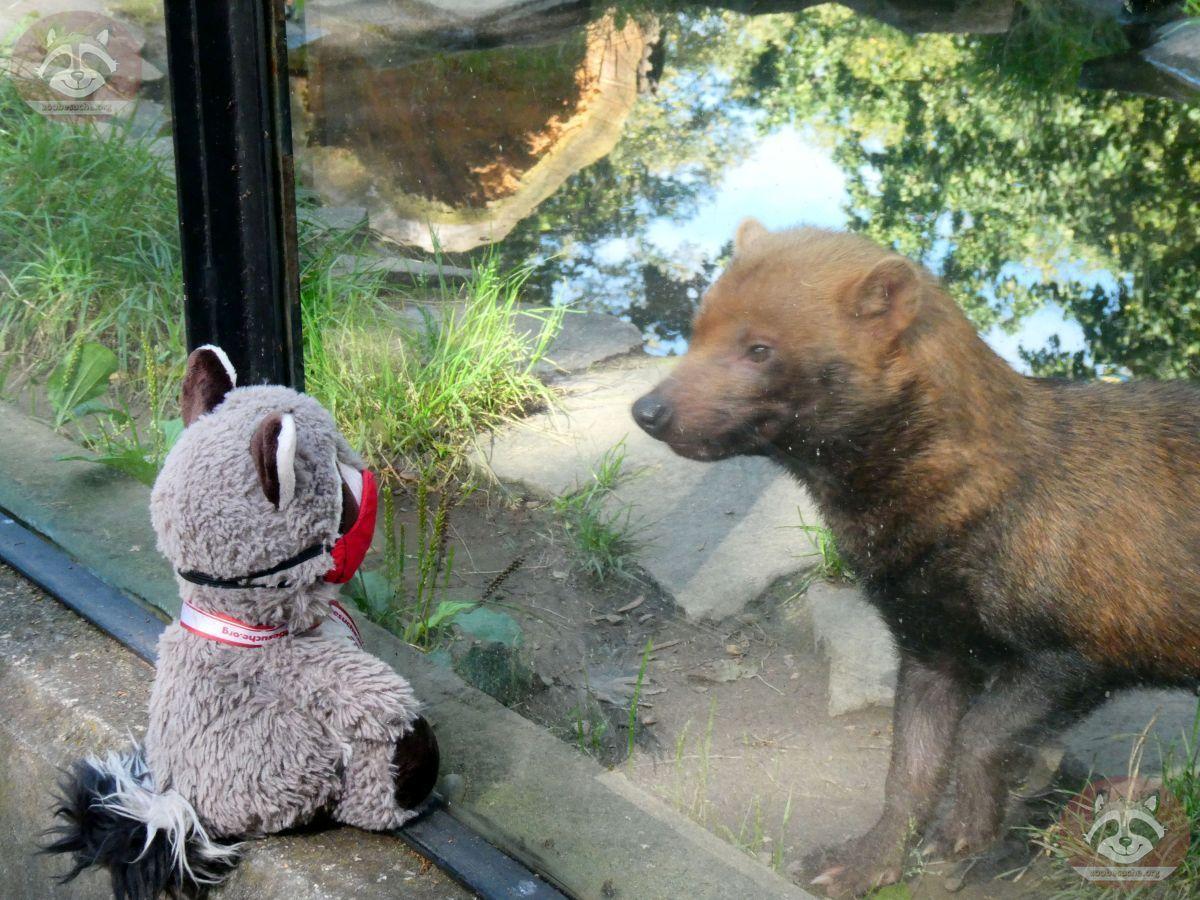 Waldhund mit Wuschel (4)