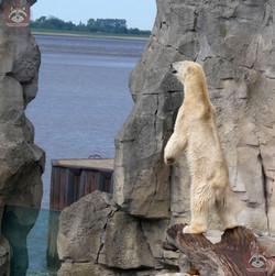 Eisbär Loyd (3)