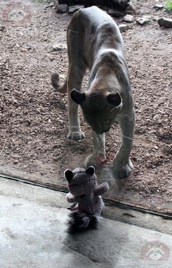 Wuschel mit Puma (3)