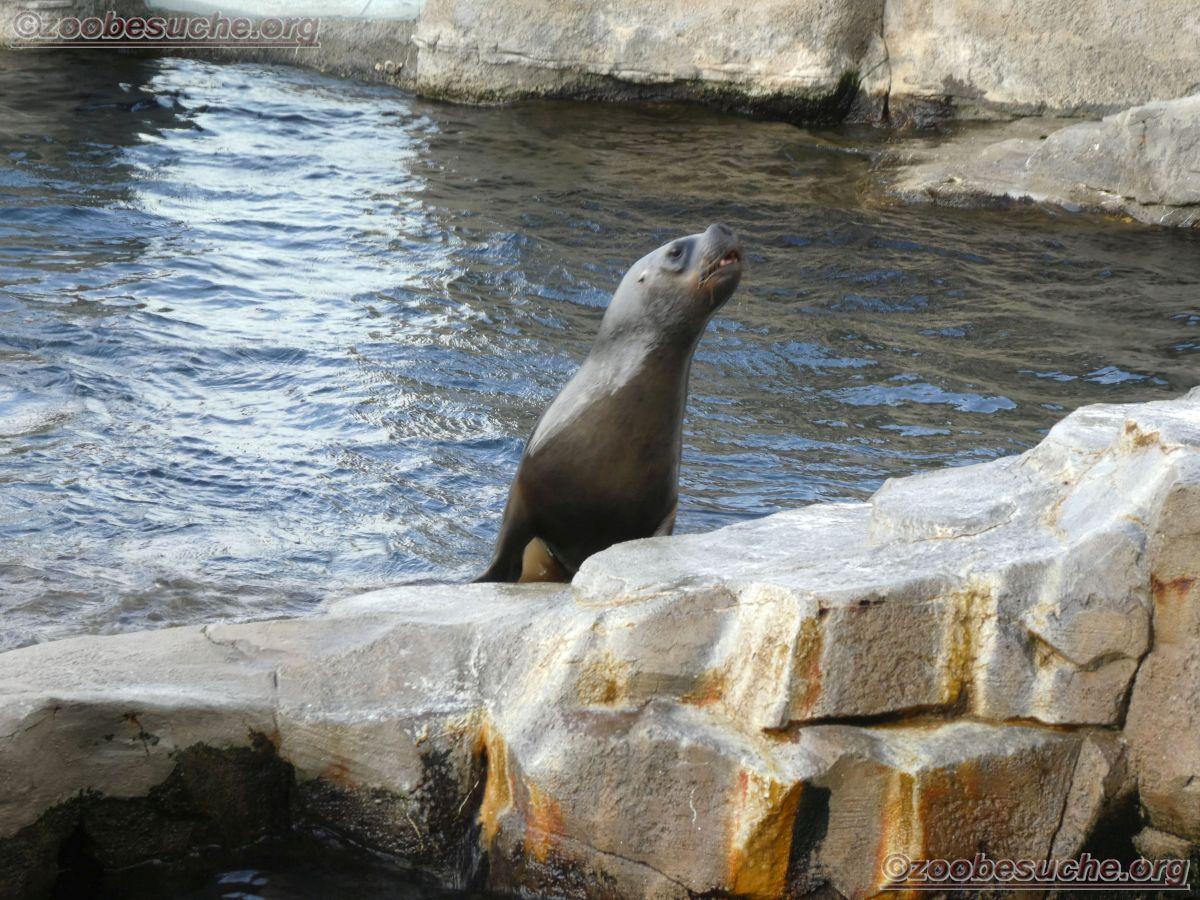 Seebären  (4)