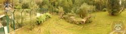Löwenanlage