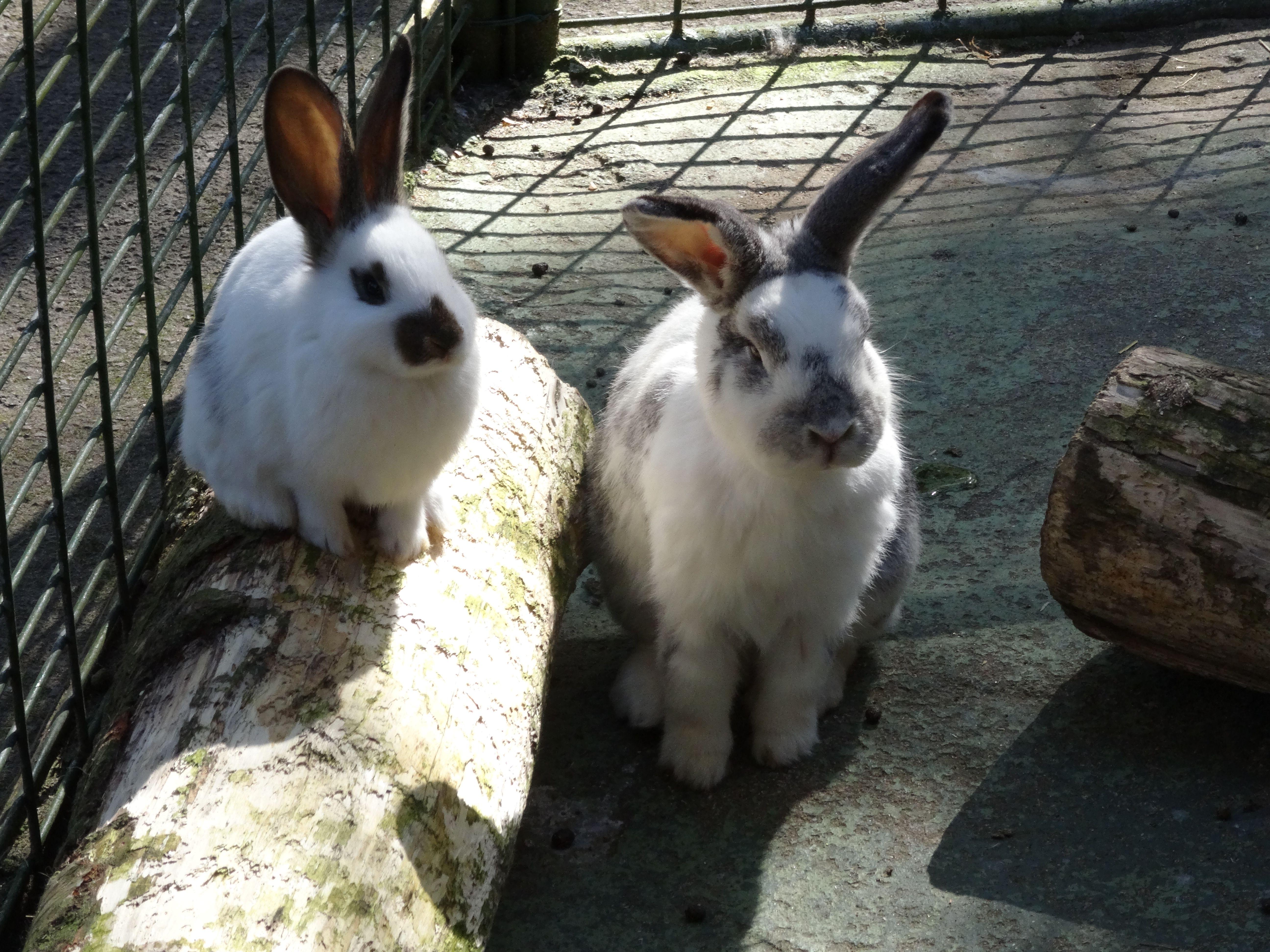 Kaninchen  (4)