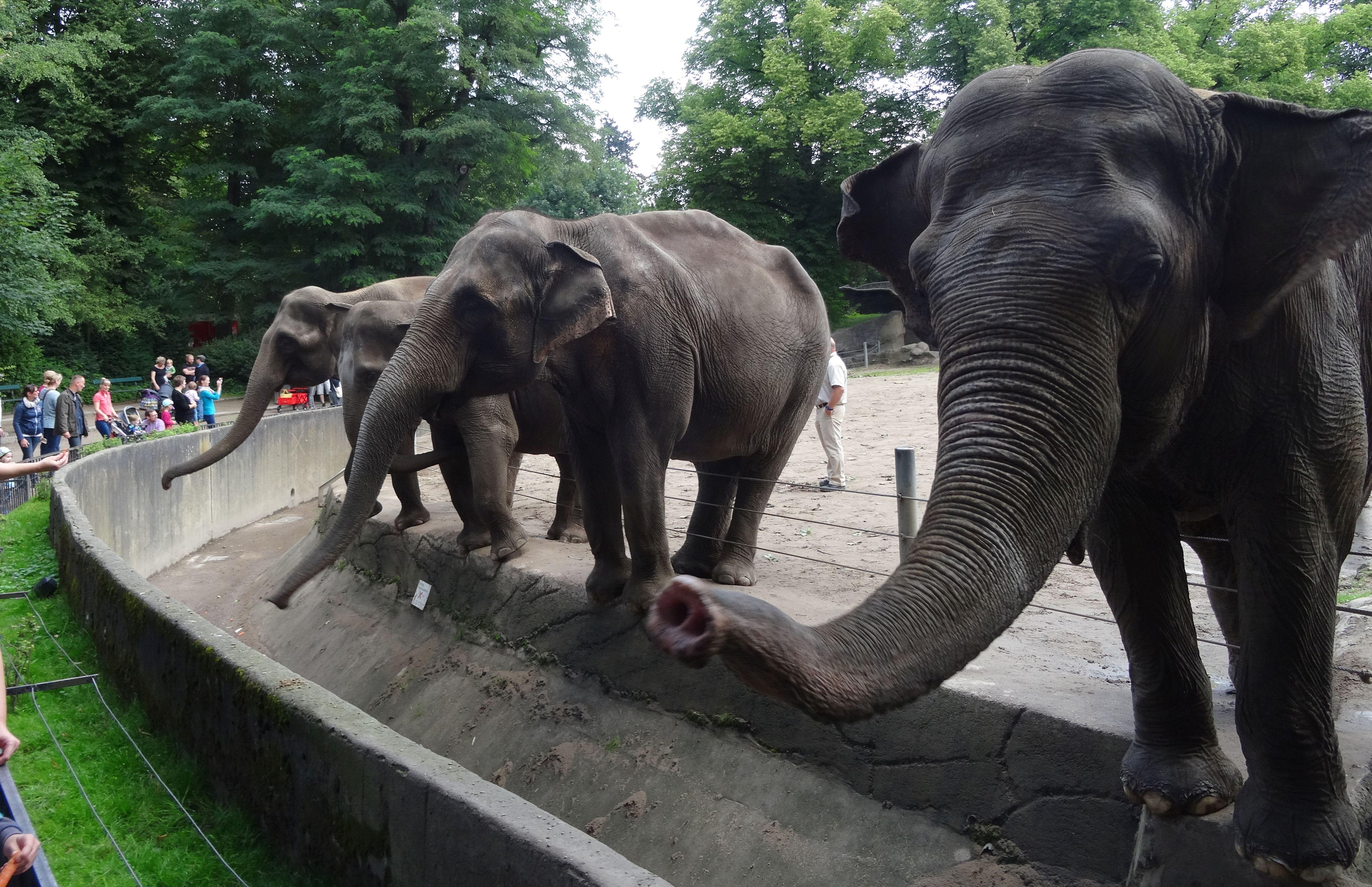 Elefanten  (5)