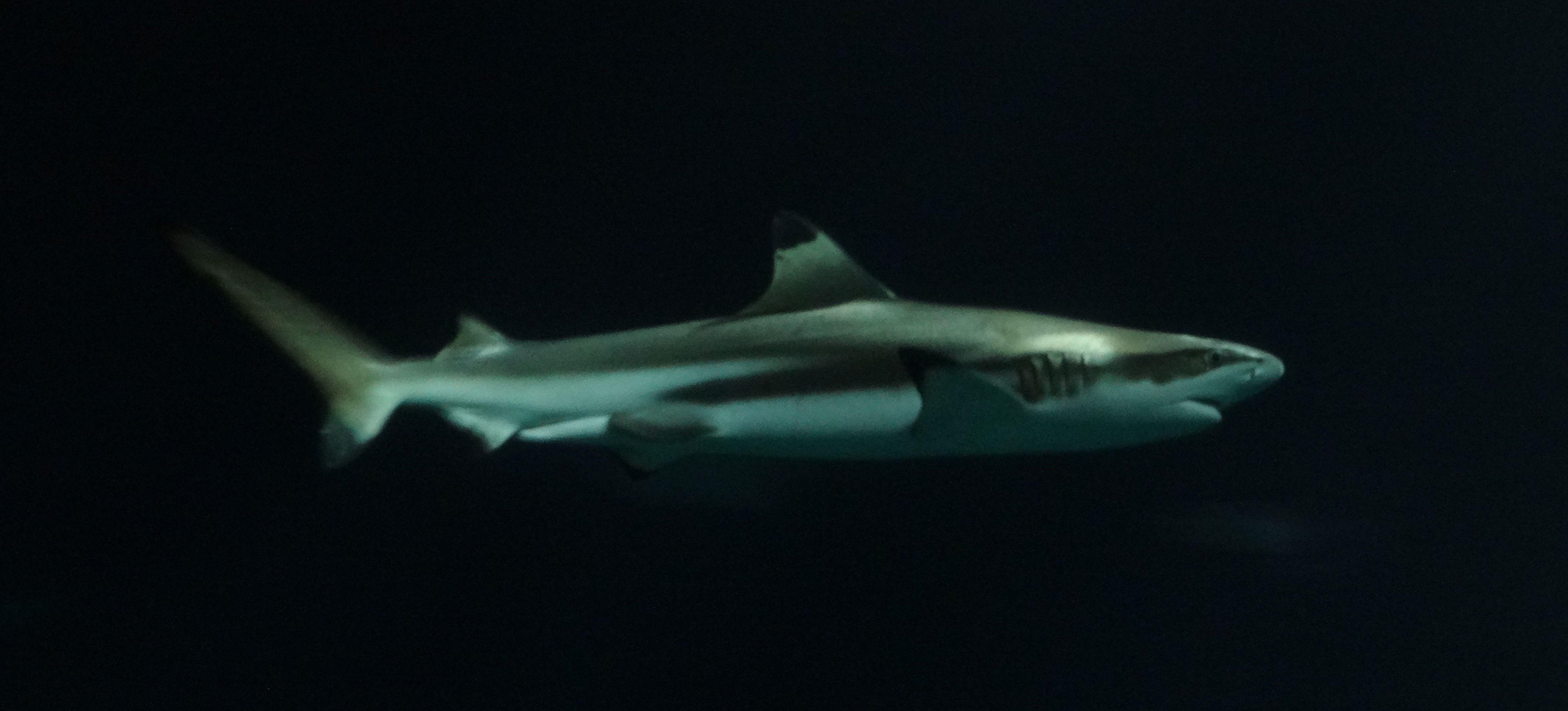 Fische  (5)
