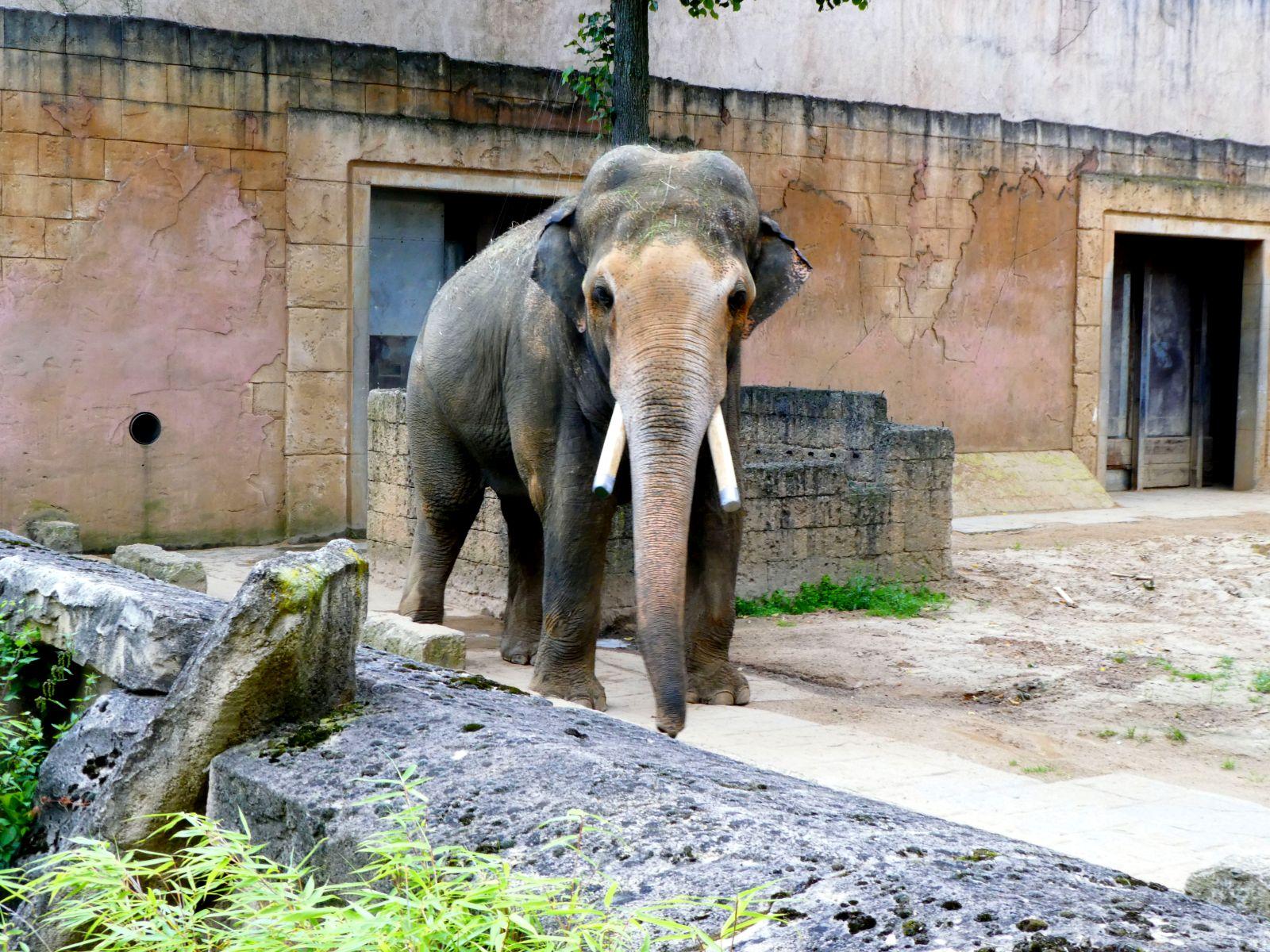 Elefanten  (31)
