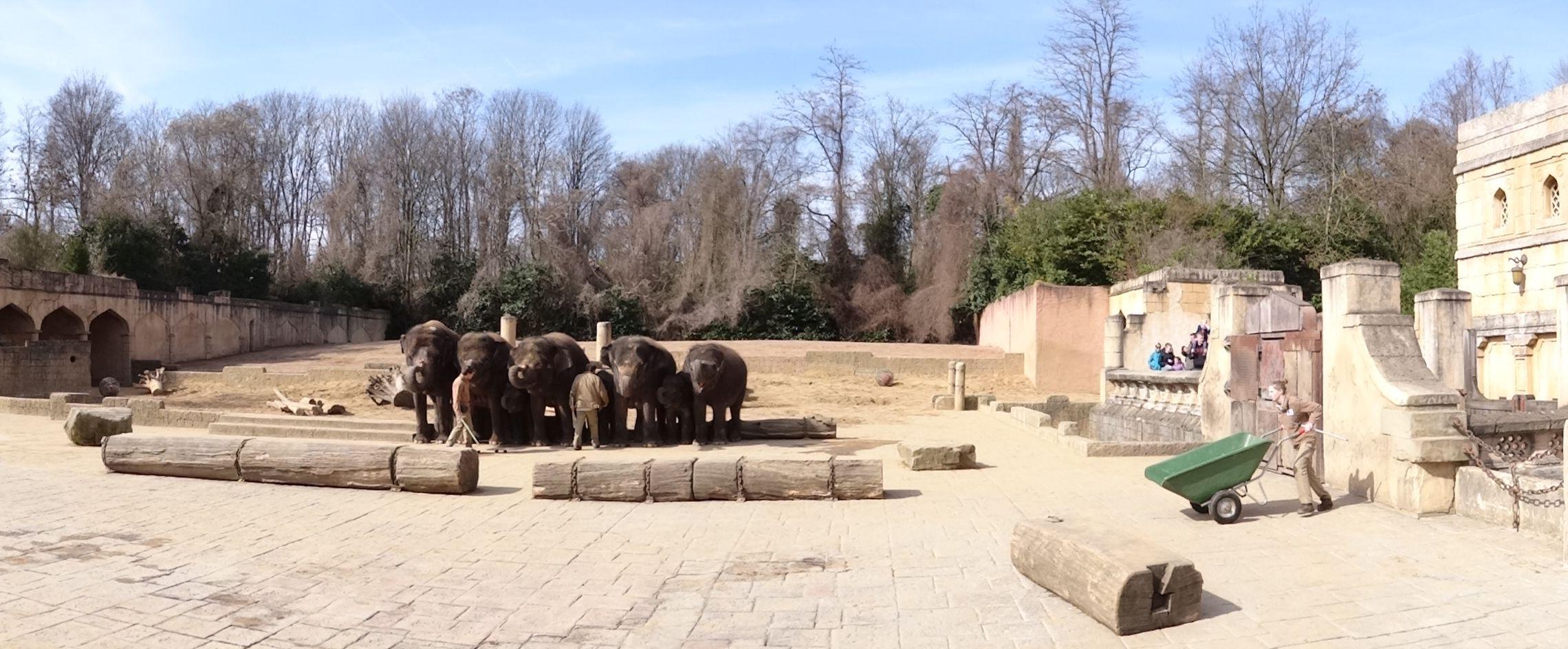Elefant  (7)