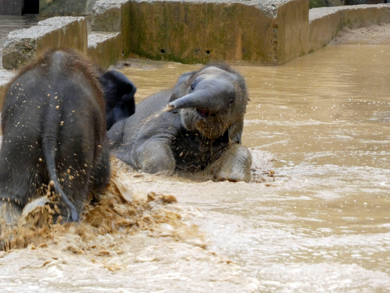 Elefanten  (25)
