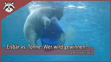 Eisbär_vs_Tonne.jpg