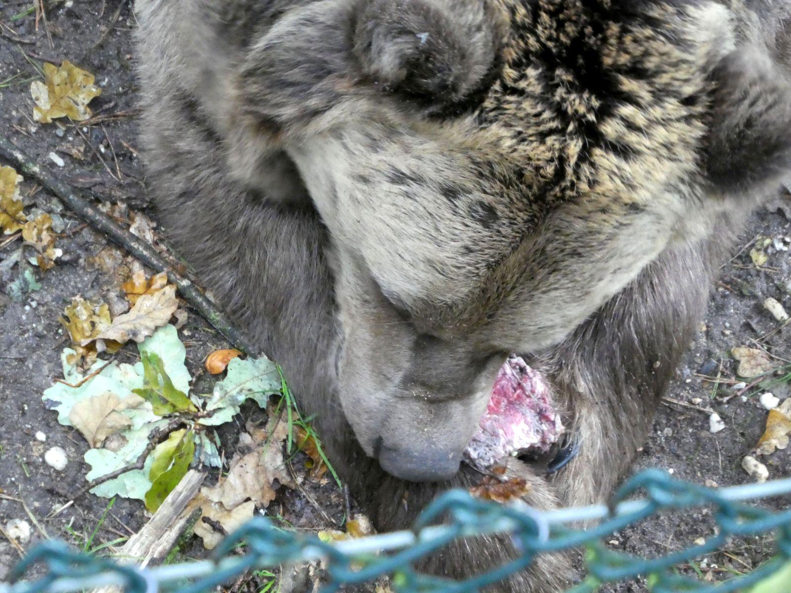 Bären  (2)