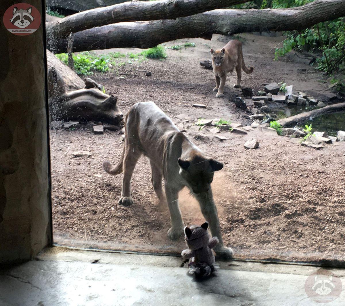 Wuschel mit Puma (1)