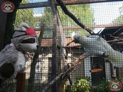 Kakadu mit Wuschel (2)