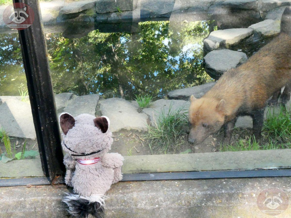 Waldhund mit Wuschel (1)