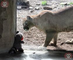 Wuschel mit Puma (13)