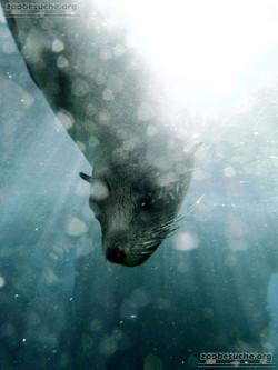 Seebär  (3)