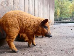 Maskenschwein (5)