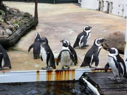 Pinguine  (2)