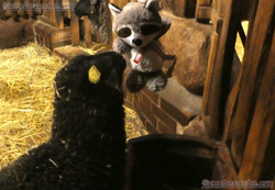 Wuschel mit Schaf