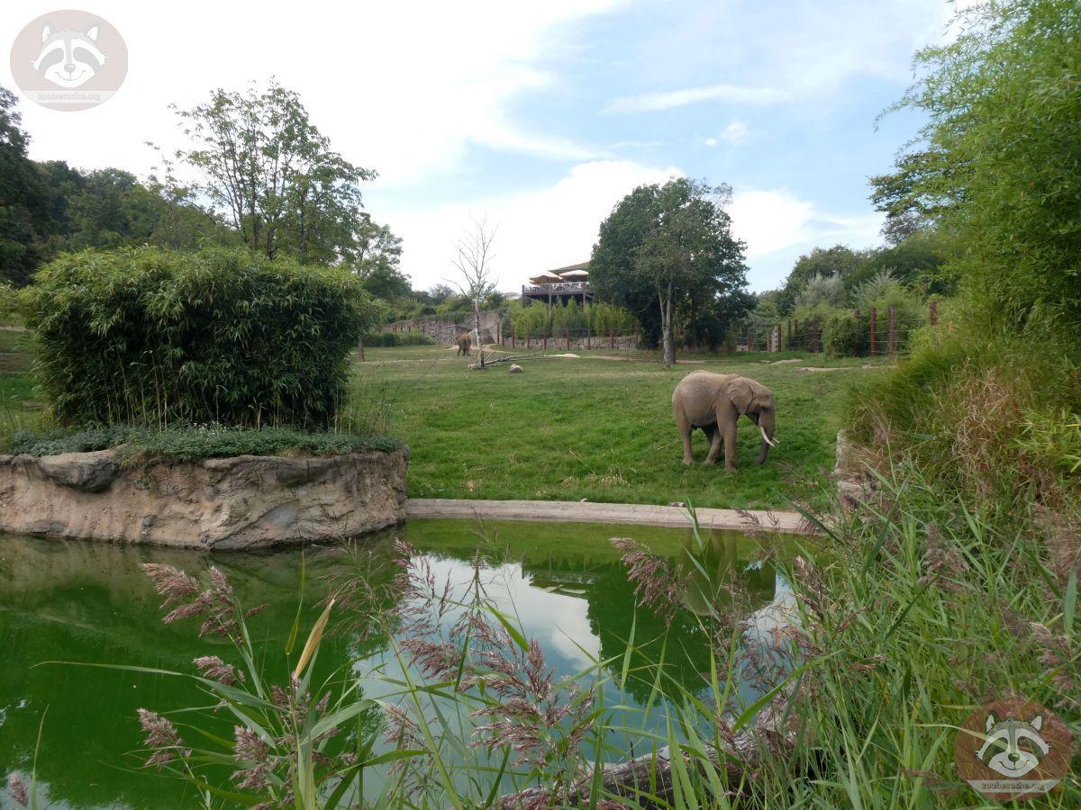 Elefantenanlage (1)