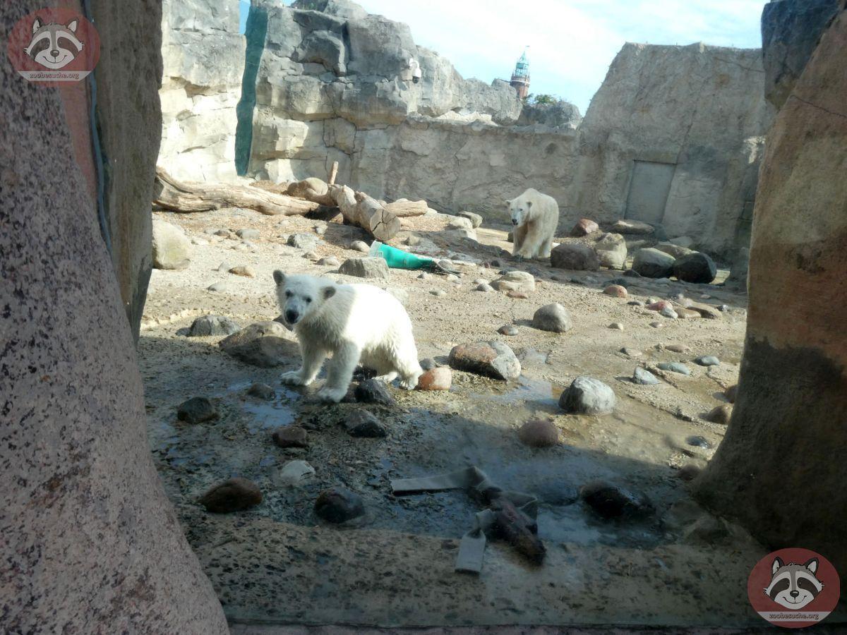 Eisbären  (18)