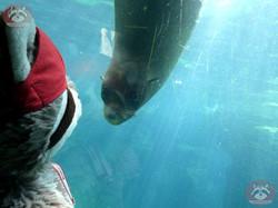 Seebär mit Wuschel (3)